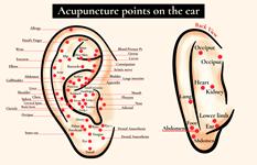 Photo décrivant les différents points d'acupuncture sur l'oreille
